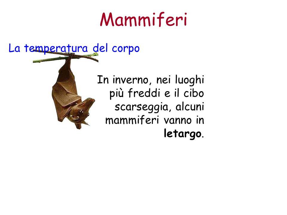 Mammiferi La temperatura del corpo In inverno, nei luoghi più freddi e il cibo scarseggia, alcuni mammiferi vanno in letargo.