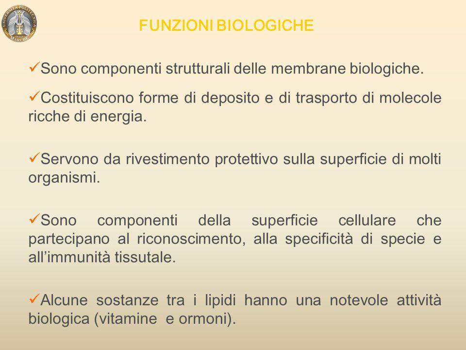 - Sono molecole ANFIPATICHE glicerolo acido fosforico Acidi grassi - Sono componenti caratteristici e principali delle membrane cellulari.