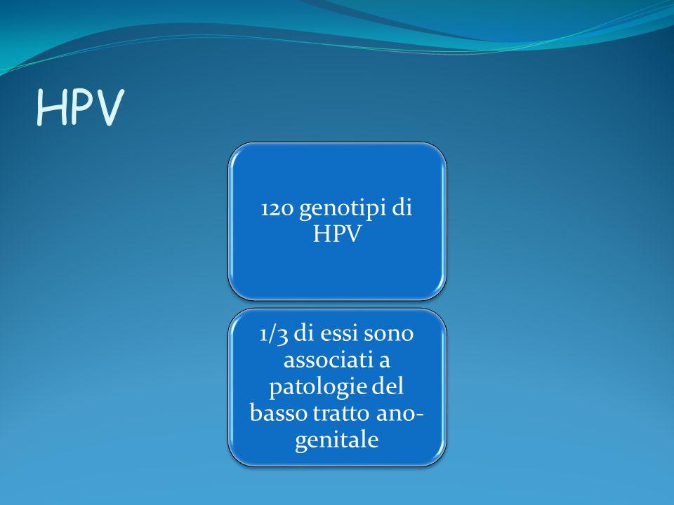 HPV 120 genotipi di HPV 1/3 di essi sono associati a patologie del basso tratto ano- genitale
