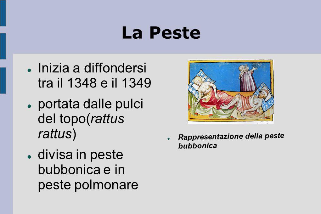La Peste Inizia a diffondersi tra il 1348 e il 1349 portata dalle pulci del topo(rattus rattus) divisa in peste bubbonica e in peste polmonare Rappres