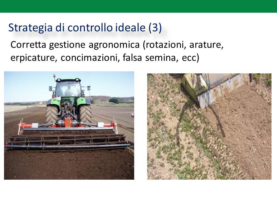 Strategia di controllo ideale (3) Corretta gestione agronomica (rotazioni, arature, erpicature, concimazioni, falsa semina, ecc)