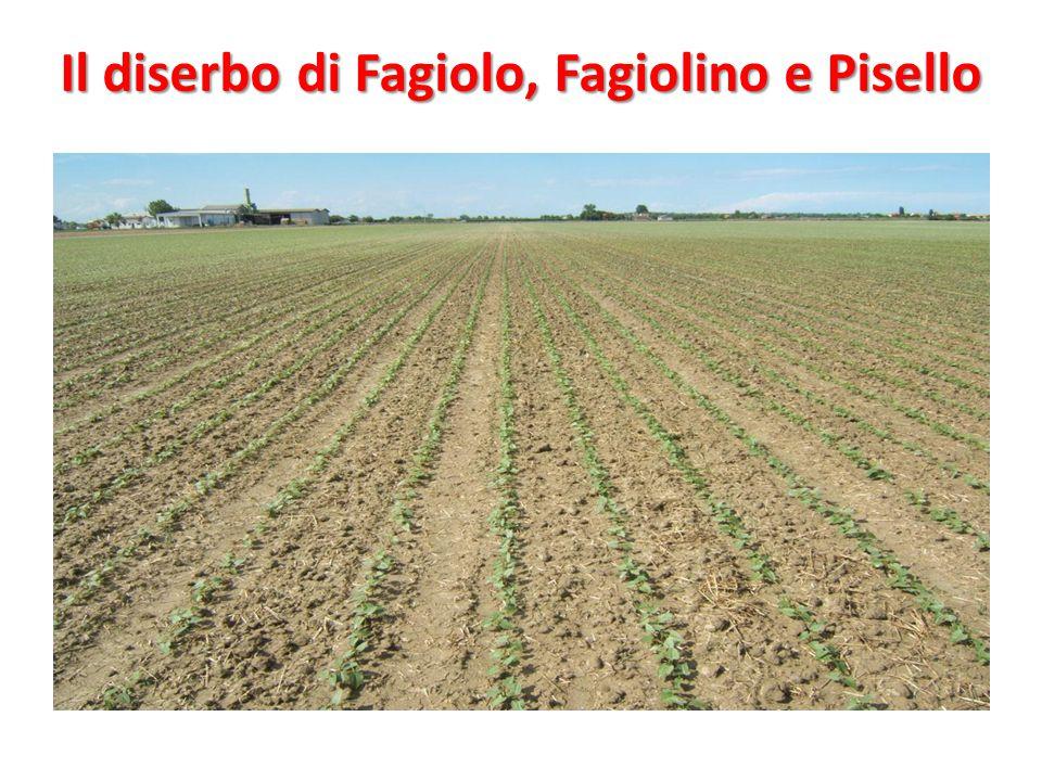 Il diserbo di Fagiolo, Fagiolino e Pisello