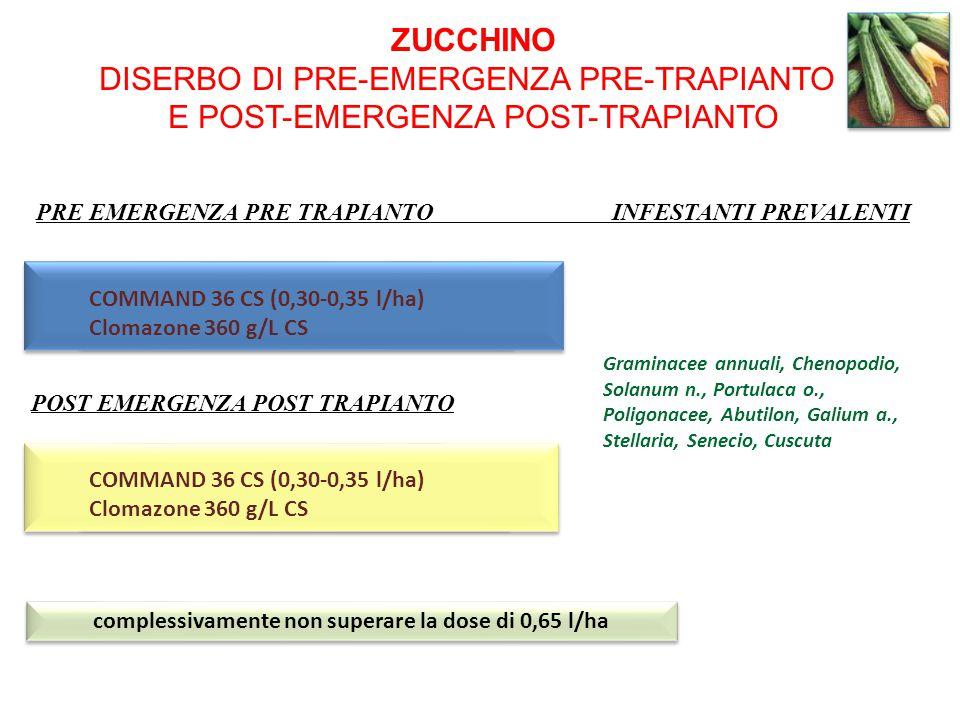 ZUCCHINO DISERBO DI PRE-EMERGENZA PRE-TRAPIANTO E POST-EMERGENZA POST-TRAPIANTO COMMAND 36 CS (0,30-0,35 l/ha) Clomazone 360 g/L CS COMMAND 36 CS (0,3
