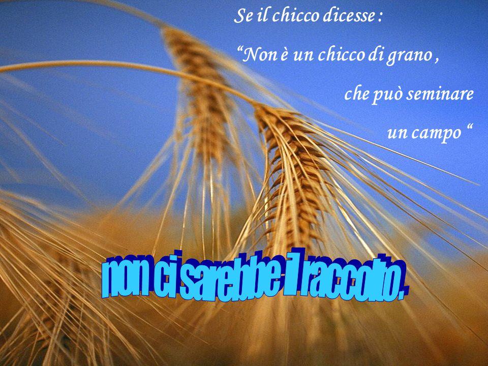 Se il chicco dicesse : Non è un chicco di grano, che può seminare un campo