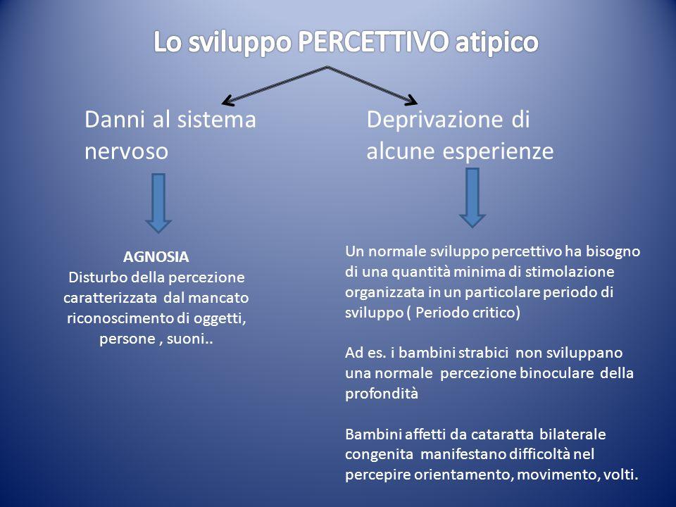 Danni al sistema nervoso Deprivazione di alcune esperienze AGNOSIA Disturbo della percezione caratterizzata dal mancato riconoscimento di oggetti, per
