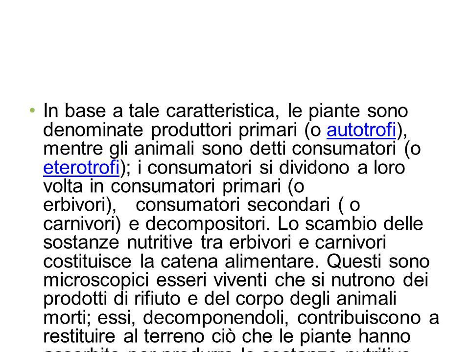 In base a tale caratteristica, le piante sono denominate produttori primari (o autotrofi), mentre gli animali sono detti consumatori (o eterotrofi); i consumatori si dividono a loro volta in consumatori primari (o erbivori), consumatori secondari ( o carnivori) e decompositori.