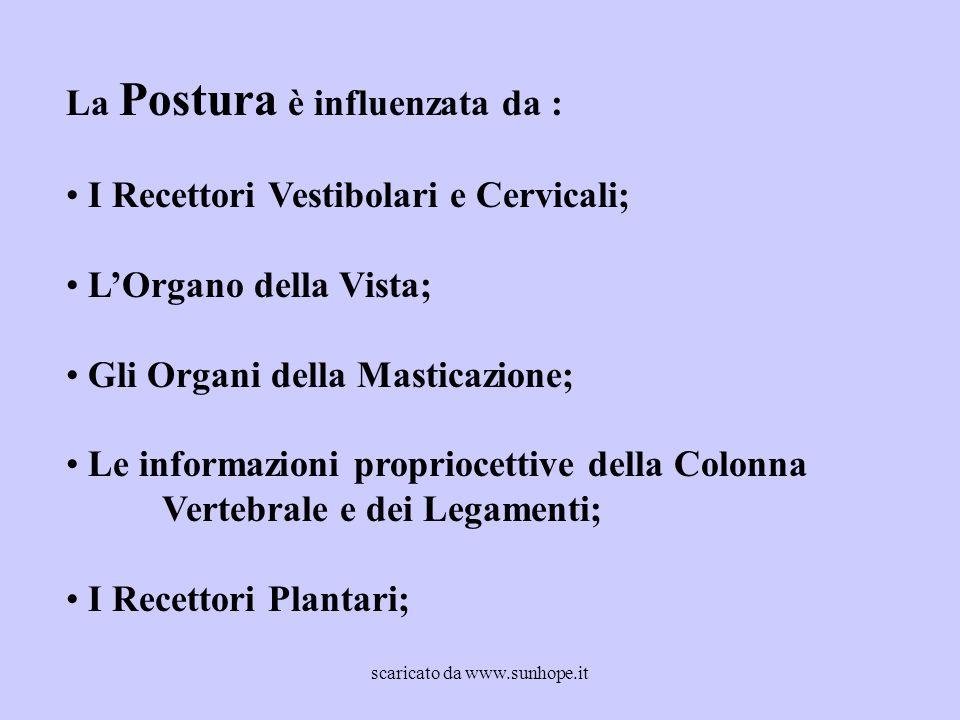 La Postura è influenzata da : I Recettori Vestibolari e Cervicali; L'Organo della Vista; Gli Organi della Masticazione; Le informazioni propriocettive