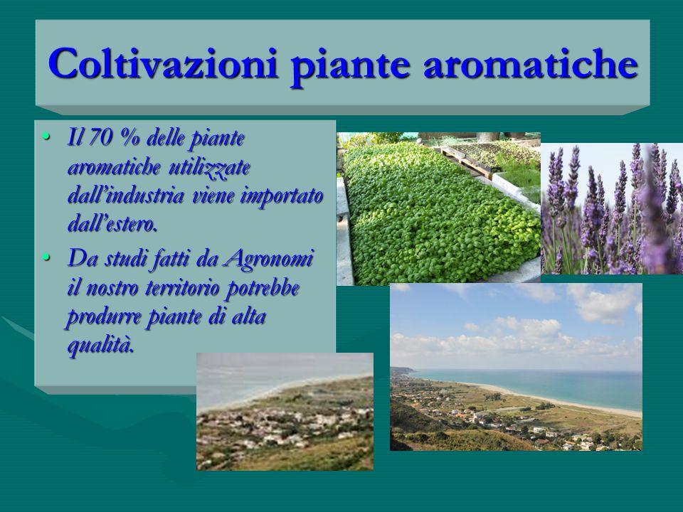 Coltivazioni piante aromatiche Il 70 % delle piante aromatiche utilizzate dall'industria viene importato dall'estero.Il 70 % delle piante aromatiche utilizzate dall'industria viene importato dall'estero.