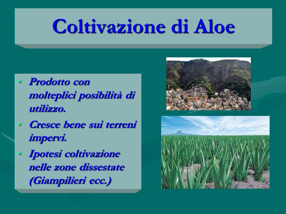Coltivazione di Aloe Prodotto con molteplici posibilità di utilizzo.Prodotto con molteplici posibilità di utilizzo.