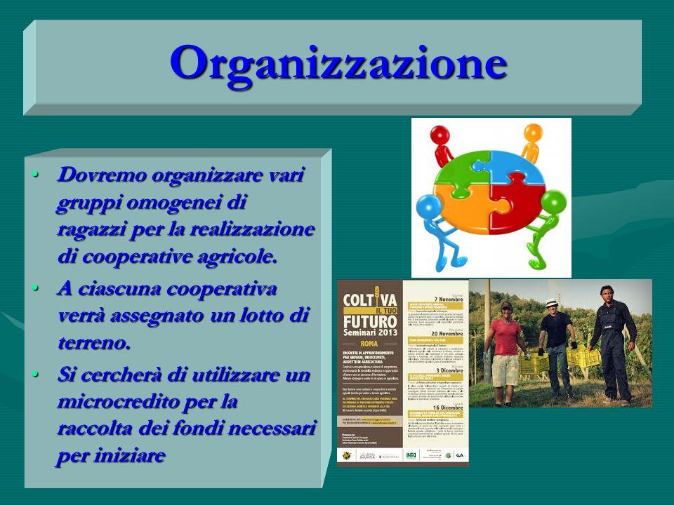 Organizzazione Dovremo organizzare vari gruppi omogenei di ragazzi per la realizzazione di cooperative agricole.Dovremo organizzare vari gruppi omogenei di ragazzi per la realizzazione di cooperative agricole.