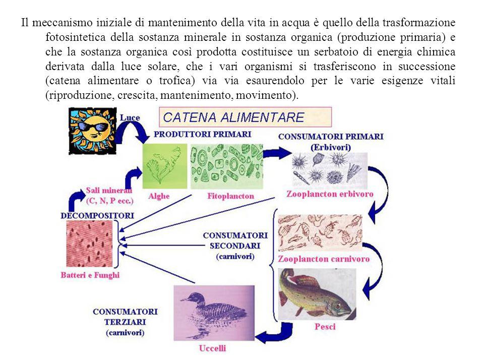 Il meccanismo iniziale di mantenimento della vita in acqua è quello della trasformazione fotosintetica della sostanza minerale in sostanza organica (p