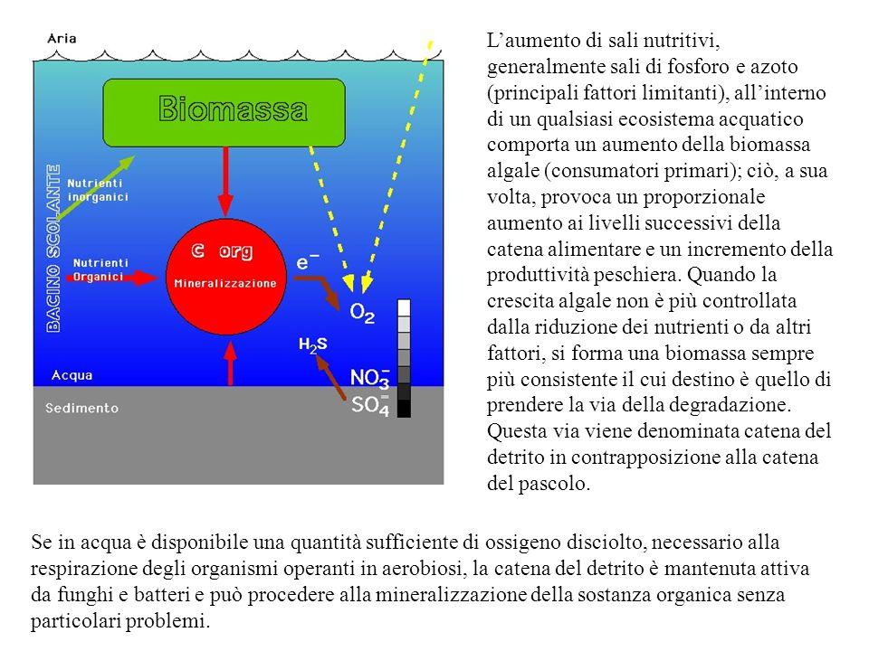 L'aumento di sali nutritivi, generalmente sali di fosforo e azoto (principali fattori limitanti), all'interno di un qualsiasi ecosistema acquatico com