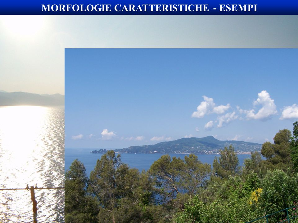 MORFOLOGIE CARATTERISTICHE - ESEMPI
