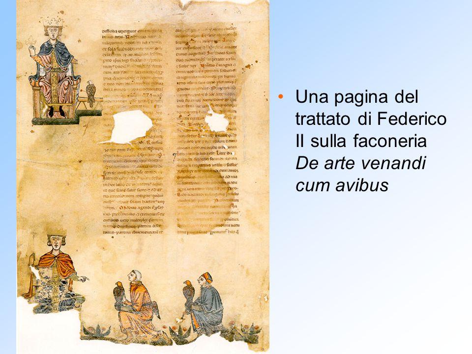 Una pagina del trattato di Federico II sulla faconeria De arte venandi cum avibus