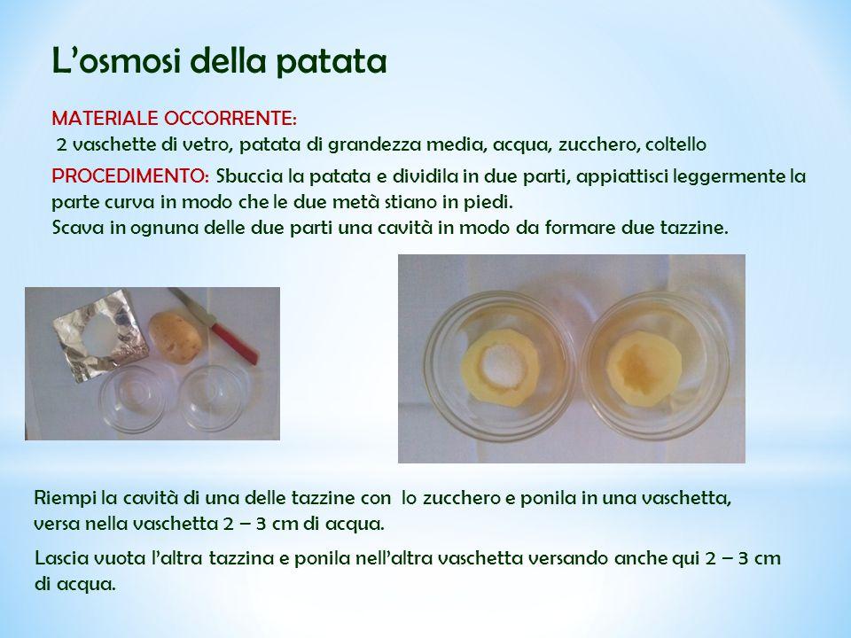L'osmosi della patata MATERIALE OCCORRENTE: 2 vaschette di vetro, patata di grandezza media, acqua, zucchero, coltello PROCEDIMENTO: Sbuccia la patata