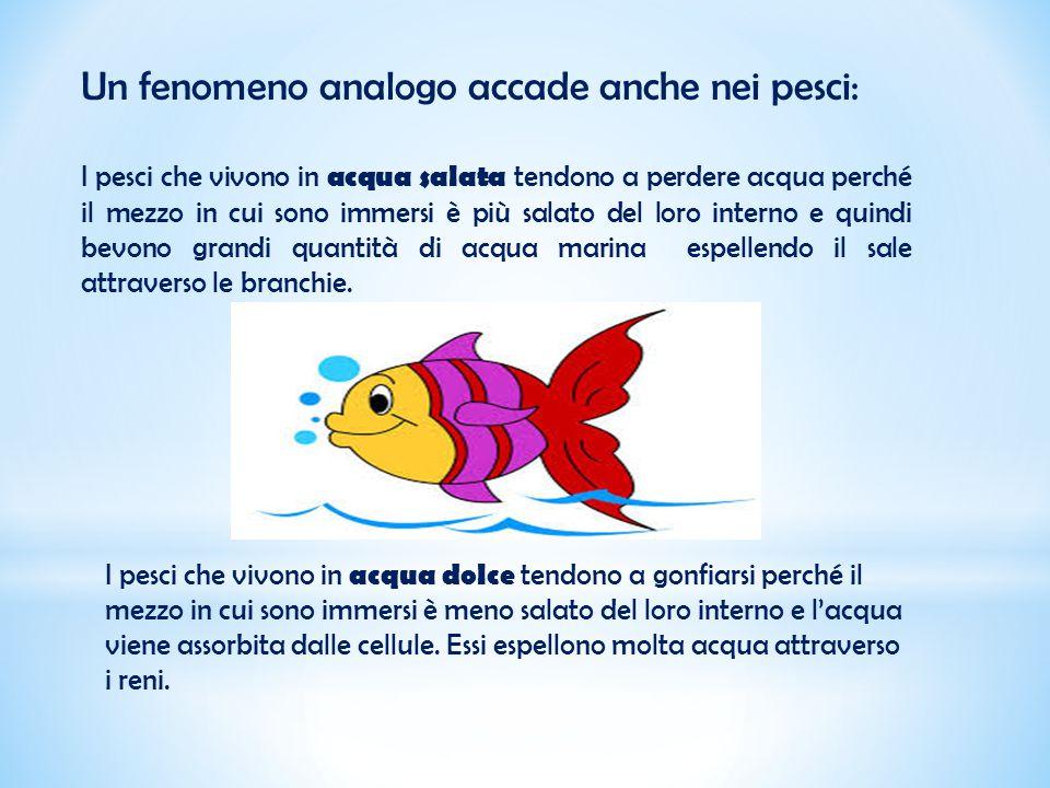 Un fenomeno analogo accade anche nei pesci: I pesci che vivono in acqua salata tendono a perdere acqua perché il mezzo in cui sono immersi è più salat