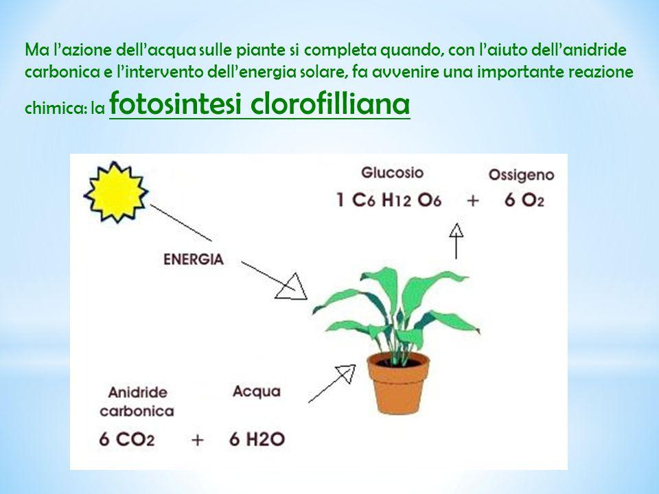 Ma l'azione dell'acqua sulle piante si completa quando, con l'aiuto dell'anidride carbonica e l'intervento dell'energia solare, fa avvenire una import
