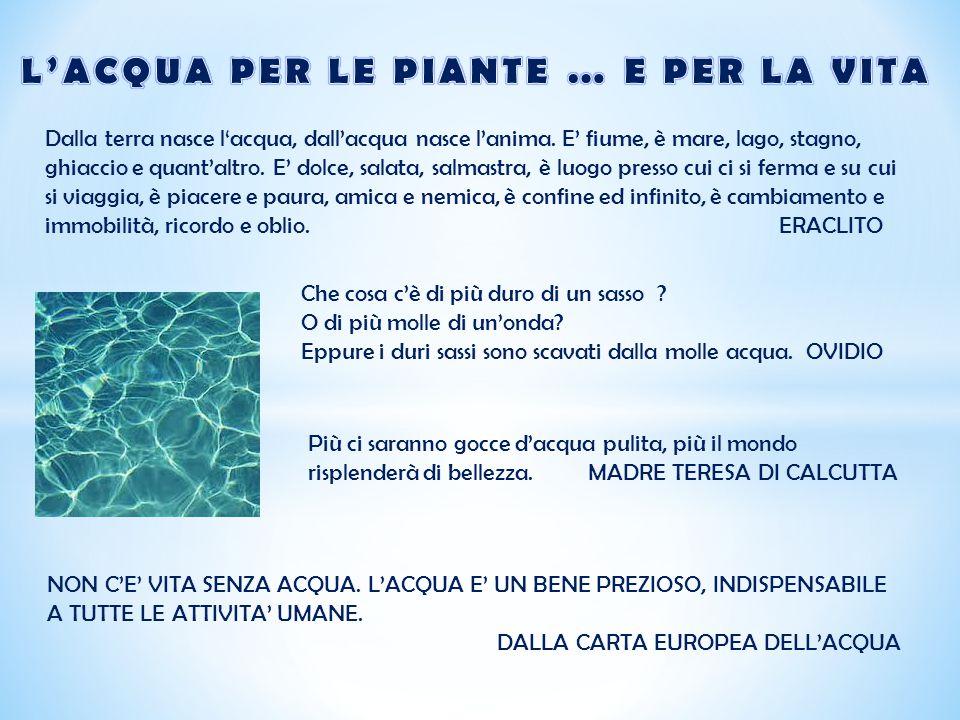 * L'acqua presenta caratteristiche che la differenziano in parte dagli altri liquidi e che la rendono fondamentale per la sopravvivenza degli esseri viventi: vediamo quali sono.