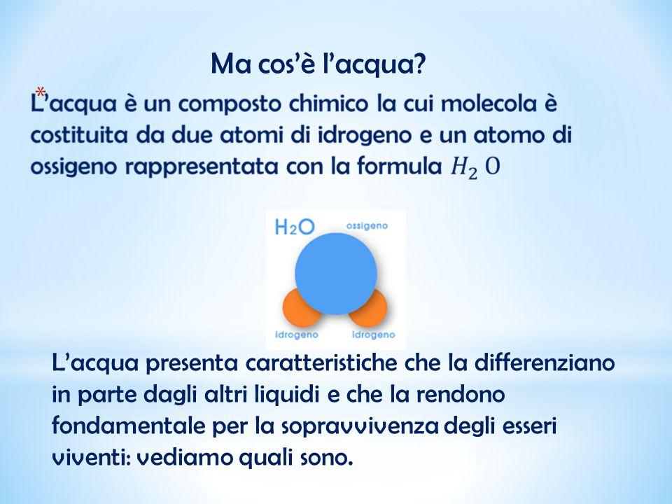 Le molecole dell'acqua sono tenute insieme da particolari forze di attrazione, le forze di coesione.