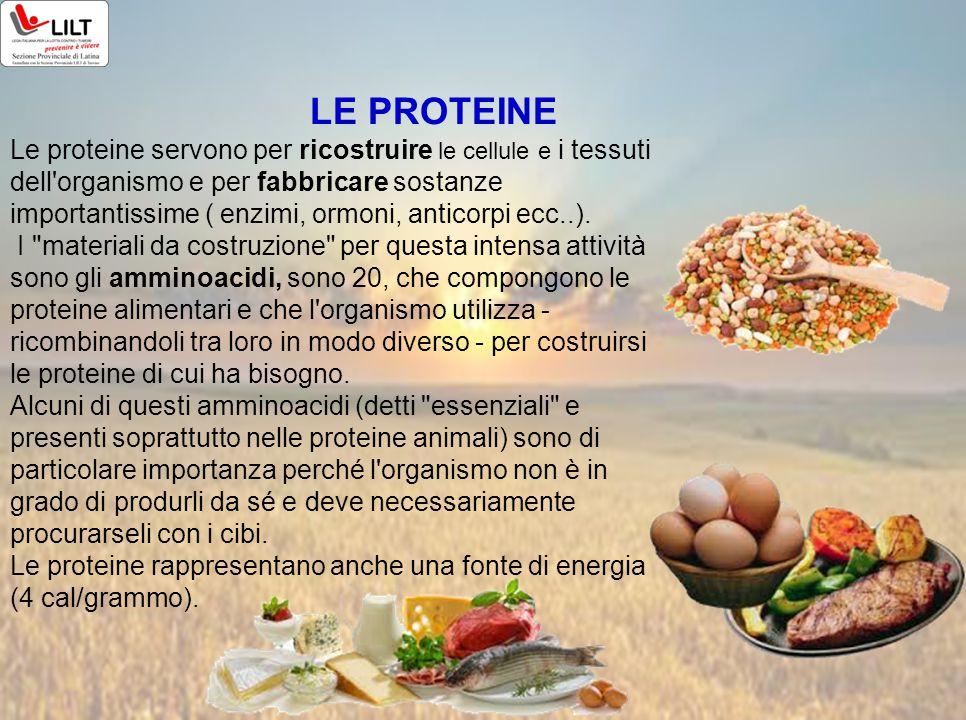 LE PROTEINE Le proteine servono per ricostruire le cellule e i tessuti dell'organismo e per fabbricare sostanze importantissime ( enzimi, ormoni, anti