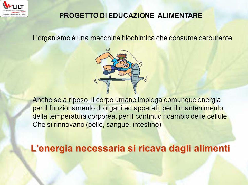 L'energia necessaria si ricava dagli alimenti PROGETTO DI EDUCAZIONE ALIMENTARE L'organismo è una macchina biochimica che consuma carburante Anche se