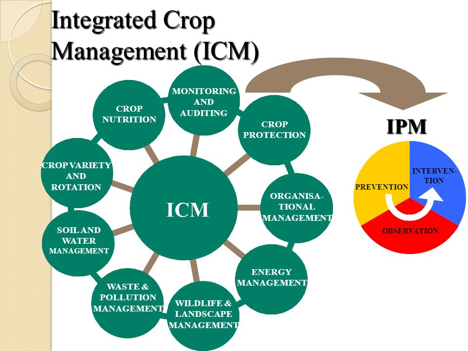 Integrated Crop Management (ICM) ICM MONITORING AND AUDITING ORGANISA- TIONAL MANAGEMENT WASTE & POLLUTION MANAGEMENT ENERGY MANAGEMENT WILDLIFE & LANDSCAPE MANAGEMENT CROP PROTECTION SOIL AND WATER MANAGEMENT CROP VARIETY AND ROTATION CROP NUTRITION IPM PREVENTION INTERVEN- TION OBSERVATION