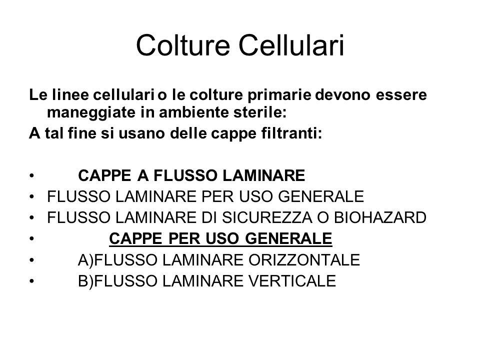 Colture Cellulari Le linee cellulari o le colture primarie devono essere maneggiate in ambiente sterile: A tal fine si usano delle cappe filtranti: CAPPE A FLUSSO LAMINARE FLUSSO LAMINARE PER USO GENERALE FLUSSO LAMINARE DI SICUREZZA O BIOHAZARD CAPPE PER USO GENERALE A)FLUSSO LAMINARE ORIZZONTALE B)FLUSSO LAMINARE VERTICALE