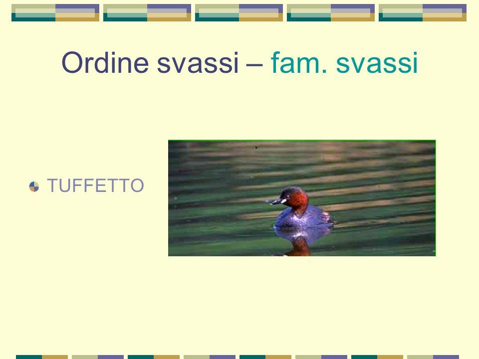 Ordine uccelli cantori - fam. corvidi CORNACCHIA NERA