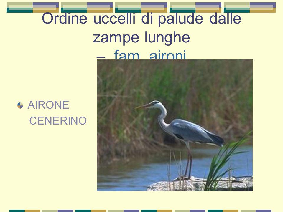 Ordine uccelli di palude dalle zampe lunghe – fam. cicogne CICOGNA BIANCA