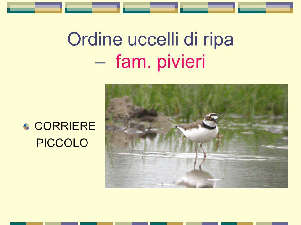 Ordine uccelli di ripa – fam. pivieri CORRIERE PICCOLO