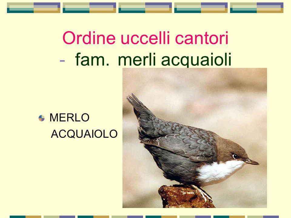 Ordine uccelli cantori - fam. merli acquaioli MERLO ACQUAIOLO