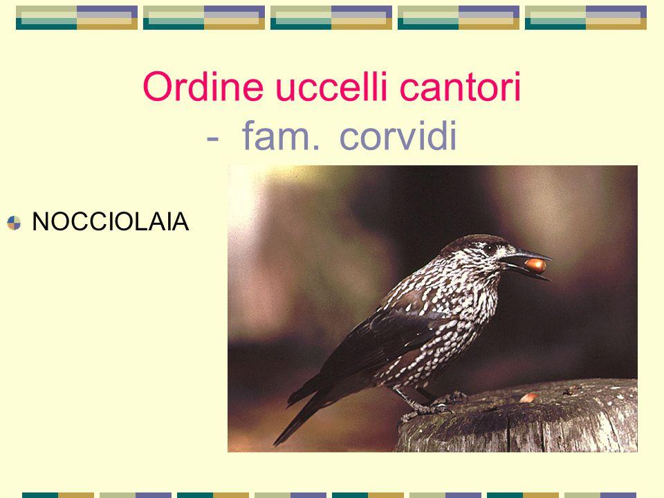 Ordine uccelli cantori - fam. corvidi NOCCIOLAIA