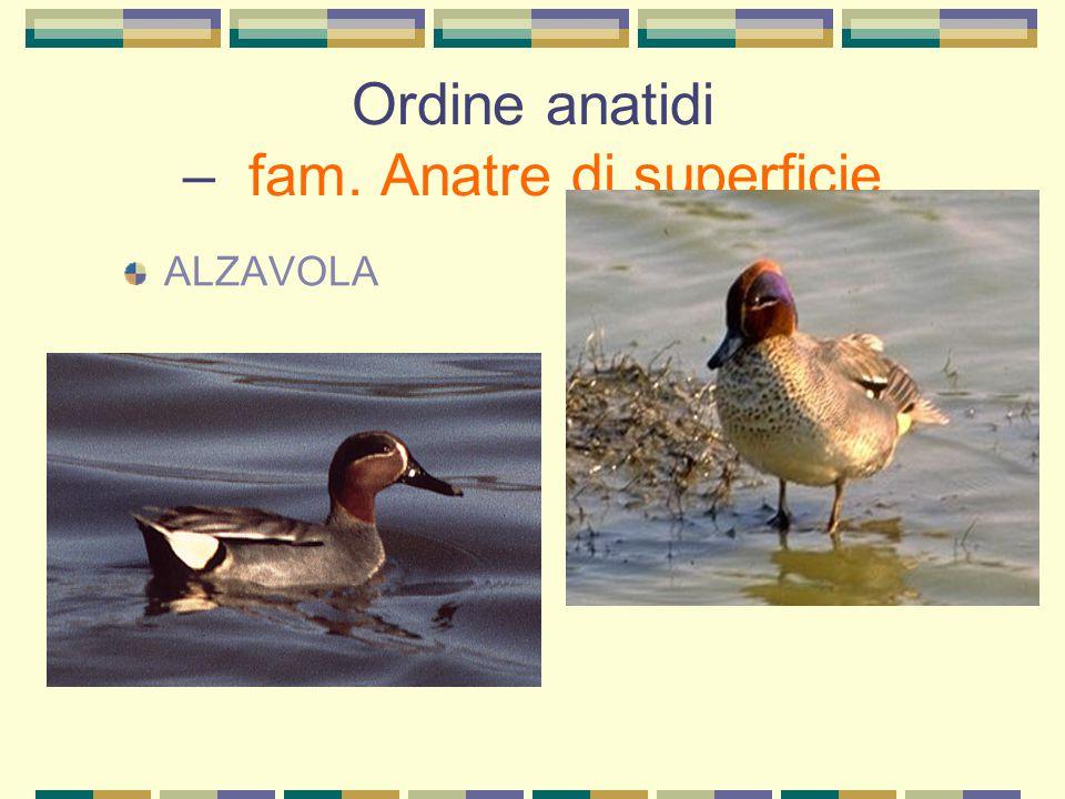 Ordine uccelli cantori - fam. corvidi TACCOLA