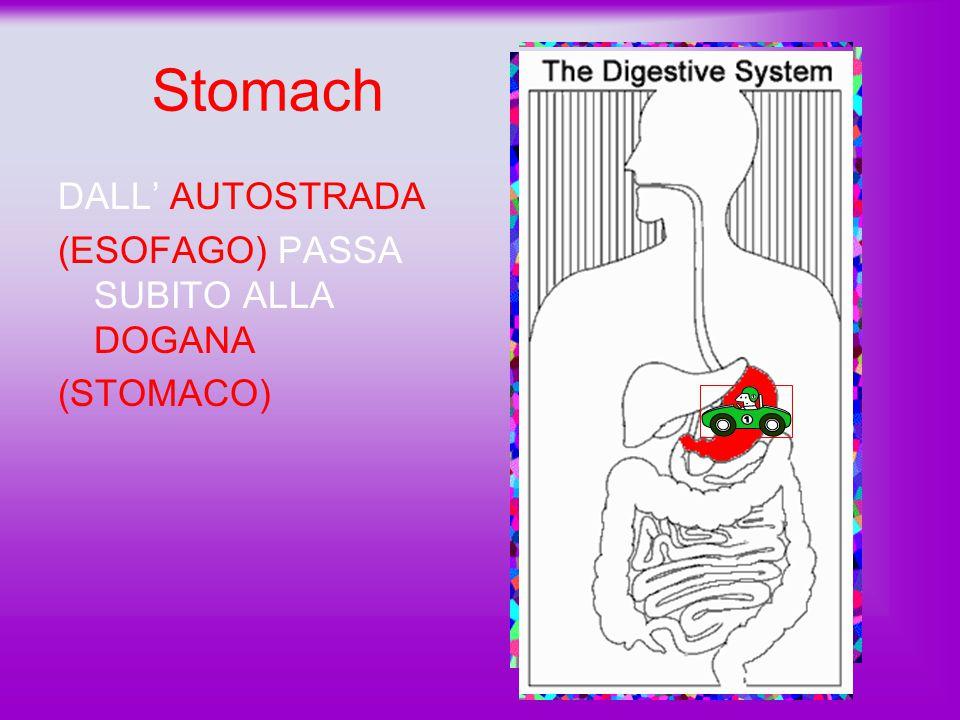 esophagus L'ESOFAGO è LUNGO circa 25 cm. DOPO CHE IL CIBO è TRITURATO DALLA BOCCA POI PASSA ALL'ESOFAGO