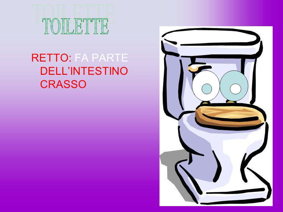 Large Intestine L'INTESTINO è LUNGO 1.5 M.