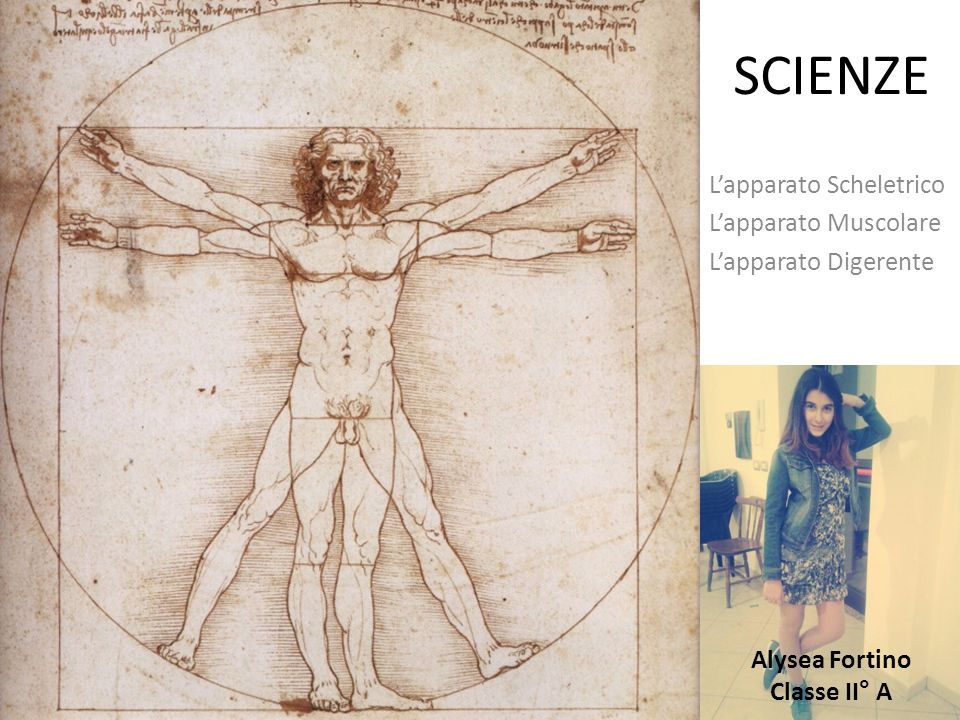 SCIENZE L'apparato Scheletrico L'apparato Muscolare L'apparato Digerente Alysea Fortino Classe II° A