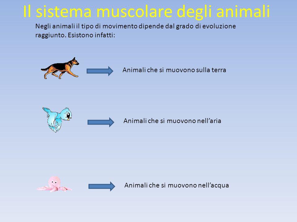 Il sistema muscolare degli animali Animali che si muovono nell'acqua Animali che si muovono nell'aria Animali che si muovono sulla terra Negli animali il tipo di movimento dipende dal grado di evoluzione raggiunto.
