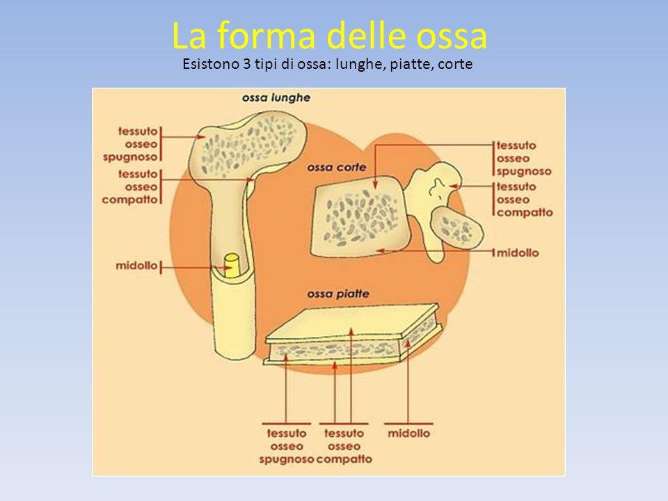 L'apparato digerente L'organismo ha bisogno di rifornirsi di materia e di energia, il processo che rende possibile il rifornimento è la nutrizione.
