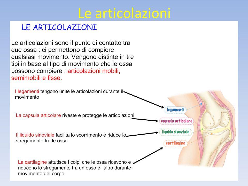 L'apparato digerente LA FARINGE È la piccola porzione di tubo che mette in comunicazione la bocca con l'esofago e la laringe.
