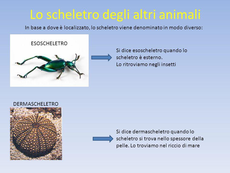 Lo scheletro degli altri animali In base a dove è localizzato, lo scheletro viene denominato in modo diverso: Si dice endoscheletro quando lo scheletro è situato all'interno e ricoperto da muscoli e pelle.