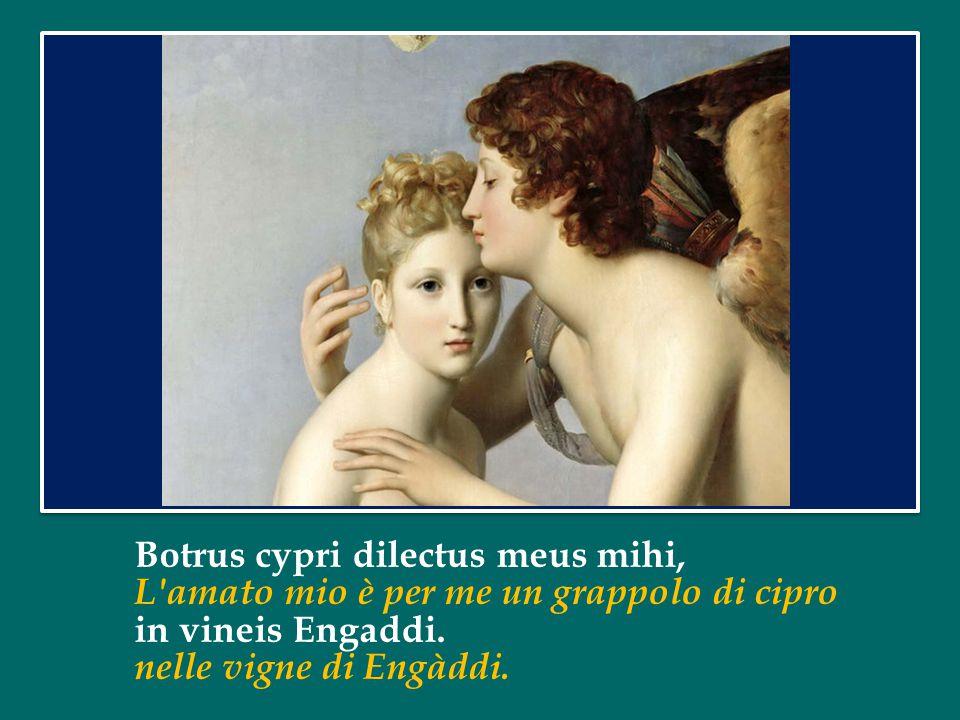 Botrus cypri dilectus meus mihi, L amato mio è per me un grappolo di cipro in vineis Engaddi.