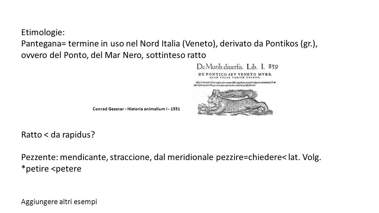 Etimologie: Pantegana= termine in uso nel Nord Italia (Veneto), derivato da Pontikos (gr.), ovvero del Ponto, del Mar Nero, sottinteso ratto Conrad Ge