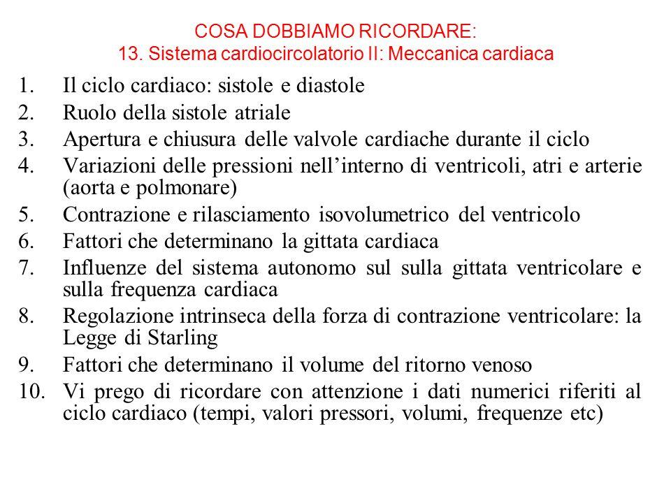 COSA DOBBIAMO RICORDARE: 13.