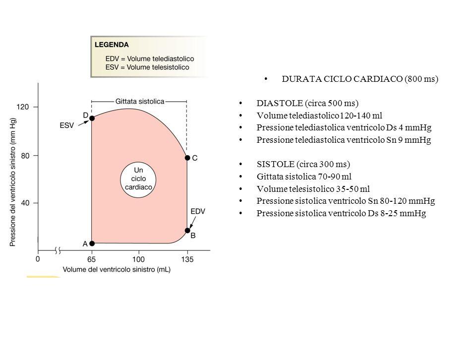 DURATA CICLO CARDIACO (800 ms) DIASTOLE (circa 500 ms) Volume telediastolico120-140 ml Pressione telediastolica ventricolo Ds 4 mmHg Pressione telediastolica ventricolo Sn 9 mmHg SISTOLE (circa 300 ms) Gittata sistolica 70-90 ml Volume telesistolico 35-50 ml Pressione sistolica ventricolo Sn 80-120 mmHg Pressione sistolica ventricolo Ds 8-25 mmHg