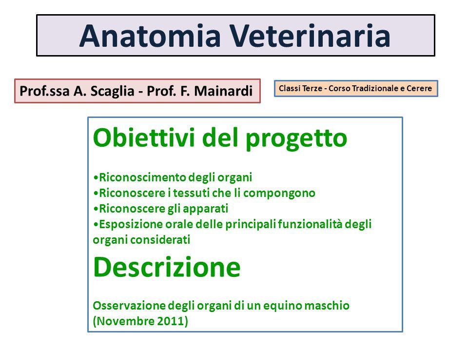 Anatomia Veterinaria Prof.ssa A. Scaglia - Prof. F. Mainardi Classi Terze - Corso Tradizionale e Cerere Obiettivi del progetto Riconoscimento degli or