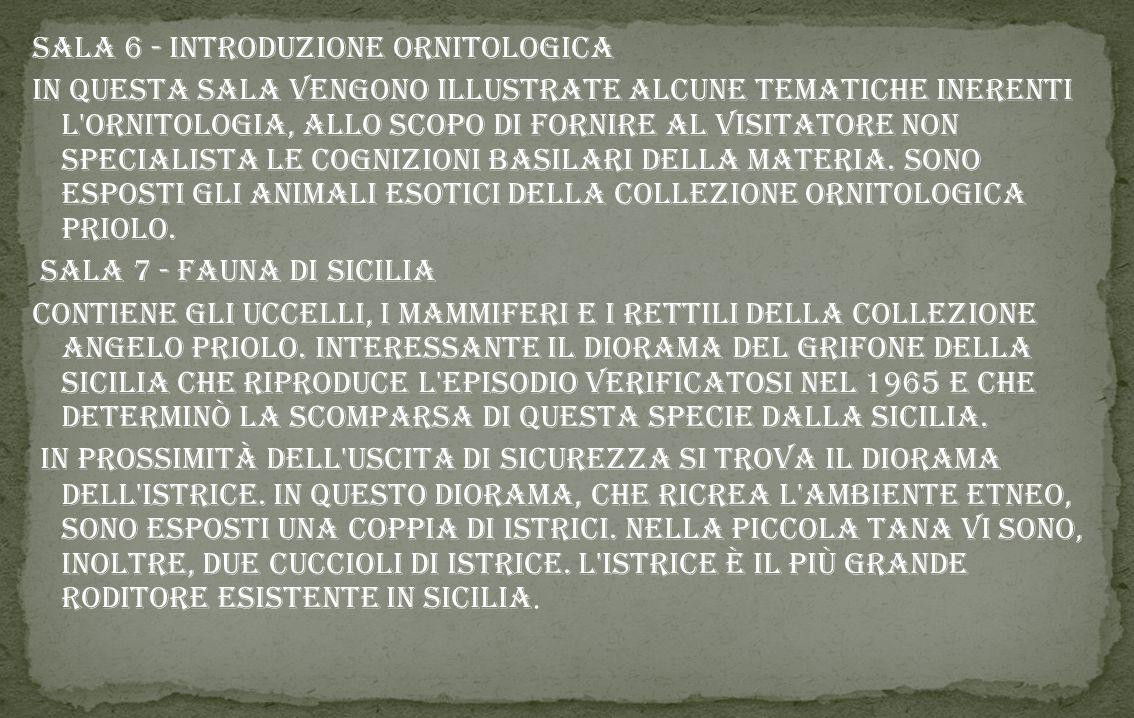 Sala 1 - Geologia Collezione Luigi Lino contenente numerosi reperti naturalistici raccolti soprattutto in Sicilia (fossili, minerali, rocce, conchigli