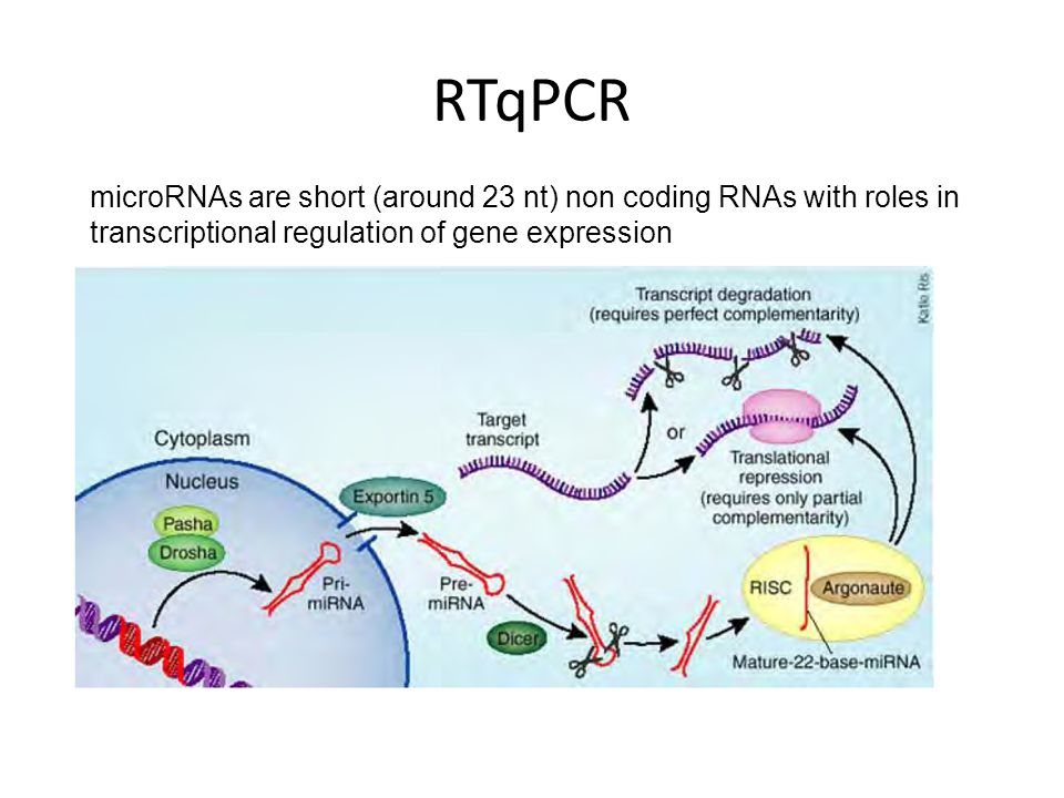 RTqPCR microRNAs are short (around 23 nt) non coding RNAs with roles in transcriptional regulation of gene expression