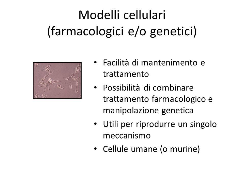 Modelli cellulari (farmacologici e/o genetici) Facilità di mantenimento e trattamento Possibilità di combinare trattamento farmacologico e manipolazione genetica Utili per riprodurre un singolo meccanismo Cellule umane (o murine)