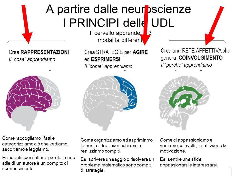 """A partire dalle neuroscienze I PRINCIPI delle UDL.......... Il cervello apprende in 3 modalità differenti Crea RAPPRESENTSAZIONI Il """"cosa"""" apprendiamo"""