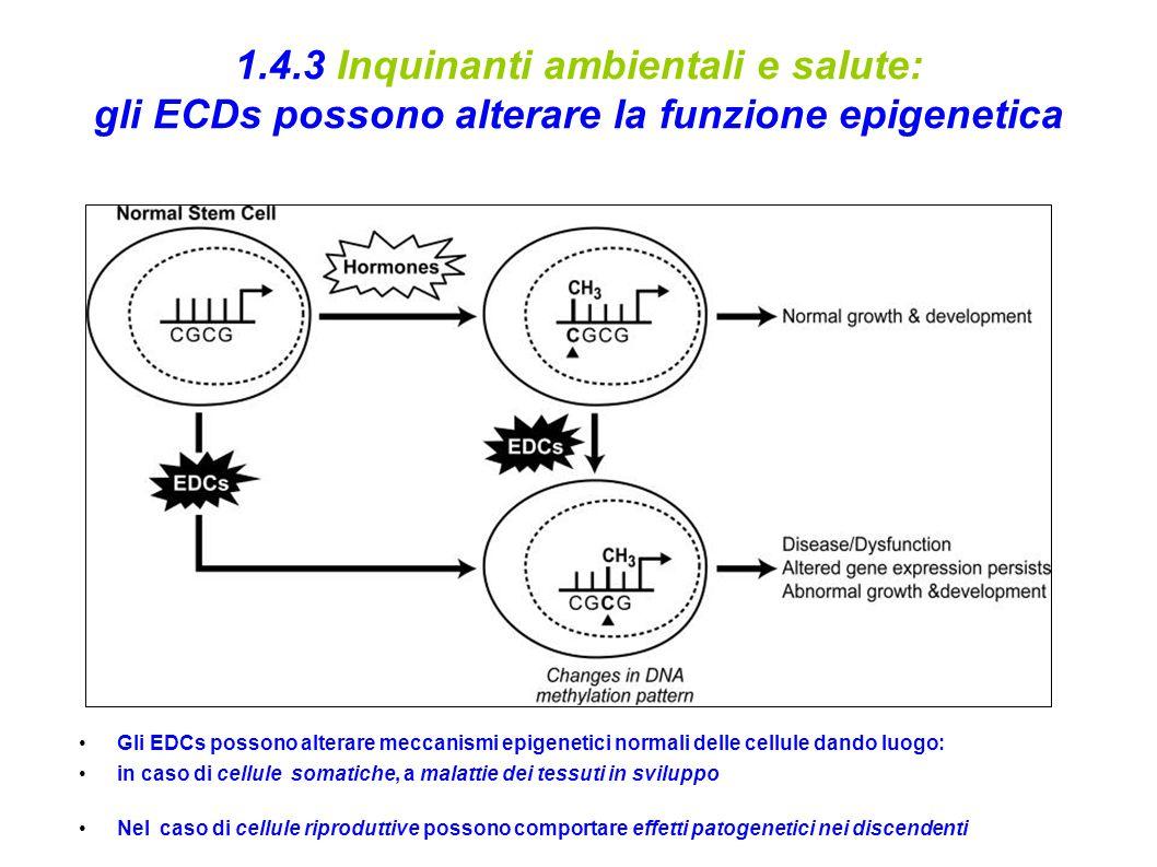 1.4.3 Inquinanti ambientali e salute: gli ECDs possono alterare la funzione epigenetica Gli EDCs possono alterare meccanismi epigenetici normali delle cellule dando luogo: in caso di cellule somatiche, a malattie dei tessuti in sviluppo Nel caso di cellule riproduttive possono comportare effetti patogenetici nei discendenti